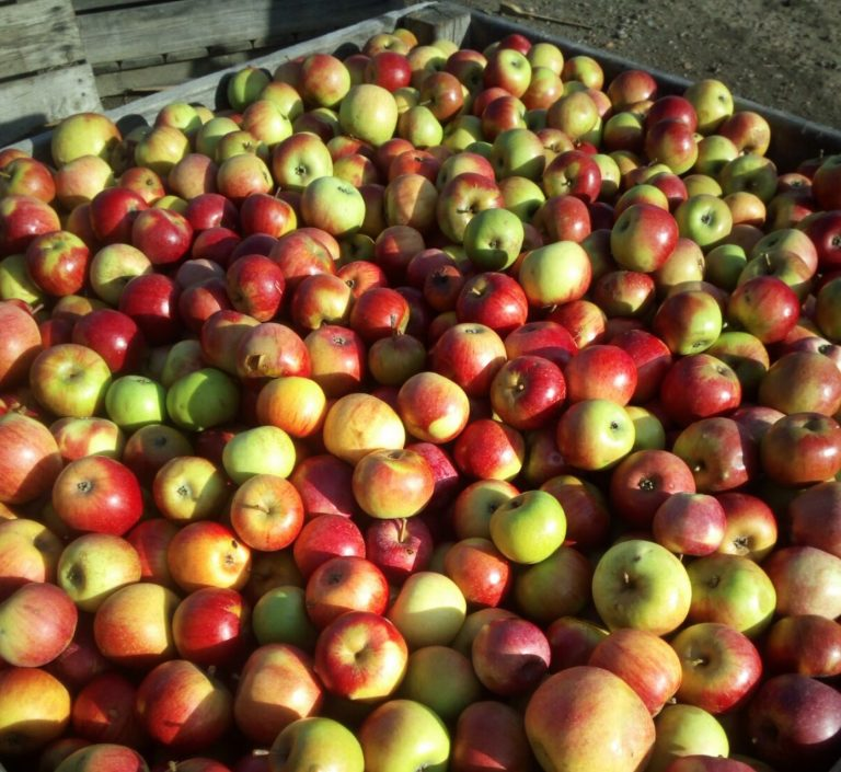 Manufacture organic apple juice permaculture