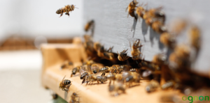apiary beekeeping permaculture